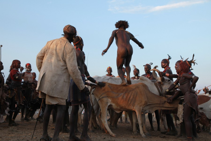 Ethiopian Cow Jumping